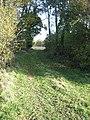 Track through belt of woodland - geograph.org.uk - 605772.jpg