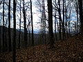 Trail to Deadennen Mountain - panoramio - Pete Seabolt.jpg