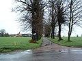 Tree Lined Farm Road - geograph.org.uk - 314341.jpg
