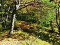 Tree On The Path - panoramio.jpg