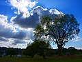 Tree and Clouds (4245495886).jpg