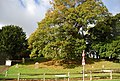 Tree in the churchyard off St George's Church, Crowhurst - geograph.org.uk - 1577445.jpg