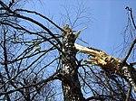 Tree of Polish Air Force Tu-154 crash (MAK report).jpg