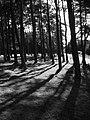 Trees, Ada Hill - geograph.org.uk - 997928.jpg