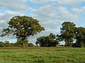Trees and field at Southwood Farms - geograph.org.uk - 1517234.jpg