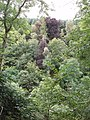 Trees in the gorge of the River Isla - geograph.org.uk - 558793.jpg