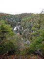 Tsuga caroliniana Linville Falls 1.jpg