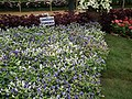 Turonia from Lalbagh flower show Aug 2013 8402.JPG