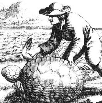 Turtling (hunting) - Image: Turtlehuntingpirate