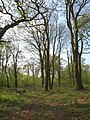 Two Post Plantation - geograph.org.uk - 2406611.jpg