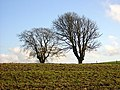 Two Trees - geograph.org.uk - 289499.jpg