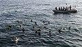 USS Bunker Hill swim call 120318-N-BC134-205.jpg