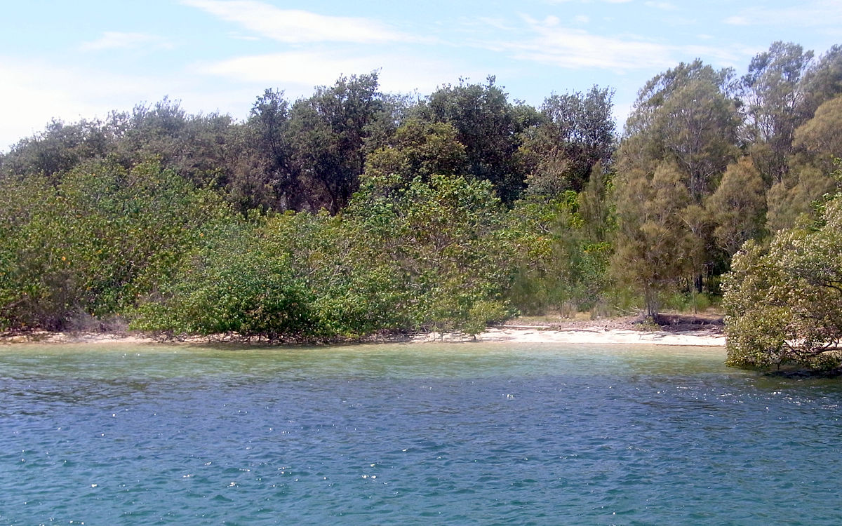 River Island Tweed Coat