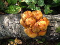 Unknown Fungi 1.JPG