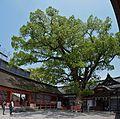 Usa shrine , 宇佐神宮 - panoramio (49).jpg