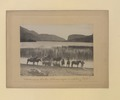 Vaseaux Lake, Okanagan Valley, British Columbia (HS85-10-21794) original.tif