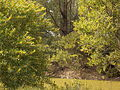 Verde Parque F. D. Roosvelt.JPG