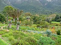 Kirstenbosch Gardens, 15 minutes drive from the CTICC