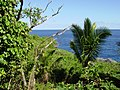 View from Coral Gardens Motel, Niue.jpg