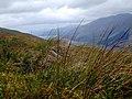 View of Loch Lochy above Glen Gloy - geograph.org.uk - 475723.jpg