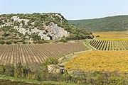 Vineyards in Roquessels 01.jpg