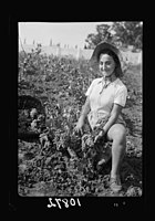 Vintage activities at Richon-le-Zion, Aug. 1939. Grape picker, close up study European immigrant girl LOC matpc.19765.jpg
