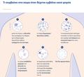 Viral-vector-vaccine-infographic-EL (3).png