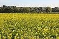 Vlaamse Ardennen 09.jpg
