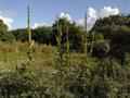 Vlakte van Waalsdorp (Waalsdorpervlakte) 2016-08-10 img. 500.png