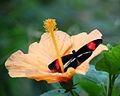 Vlinder (3).JPG