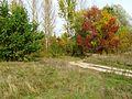Vyshcha Dubechnya Autumn 3.jpg
