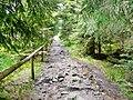 Wanderweg beim Wildseemoor - panoramio.jpg