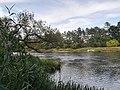 Warta River in Puszczykowo, autumn (3).jpg