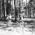West Yellowstone forest fire of 1961 - panoramio.jpg