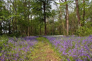 Thames Chase - This is a path through White Post Wood, part of Belhus Country Park and Thames Chase