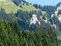 WikiProjekt Landstreicher Südhang Grünten 11.jpg