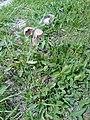 Wild flower7.jpg