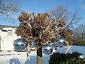 Winterkugeln2.JPG
