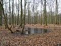 Wolbecker Tiergarten (2).JPG