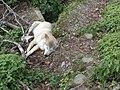 Wolf 043.jpg