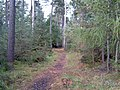 Woodland path in Moss-side Woods - geograph.org.uk - 255082.jpg