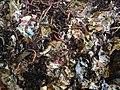 Wormcomposting.jpg