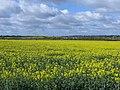 Yellow valley - April 2014 - panoramio.jpg
