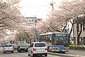 Yokohamamunicipalbus No.55line neartohkaichibastation 2009-04-07.jpg