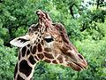 Zoo005.jpg