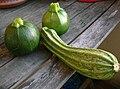 Zucchineee.JPG