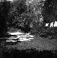 """Gout"" (gvant) ""plajka"" (pere), Kred pri Žuber 1951.jpg"