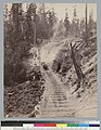 """Stud road (bullteam hauling logs), Navarro,"" Mendocino County, California. (photographic print).jpg"