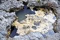 """Swiss cheese limestone"" (Pain Pond, San Salvador Island, Bahamas) 6 (16137263597).jpg"