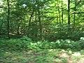 (PL) Polska - Warmia - Las Miejski w Olsztynie - The City Forest in Olsztyn (28.VIII.2012) - panoramio (39).jpg